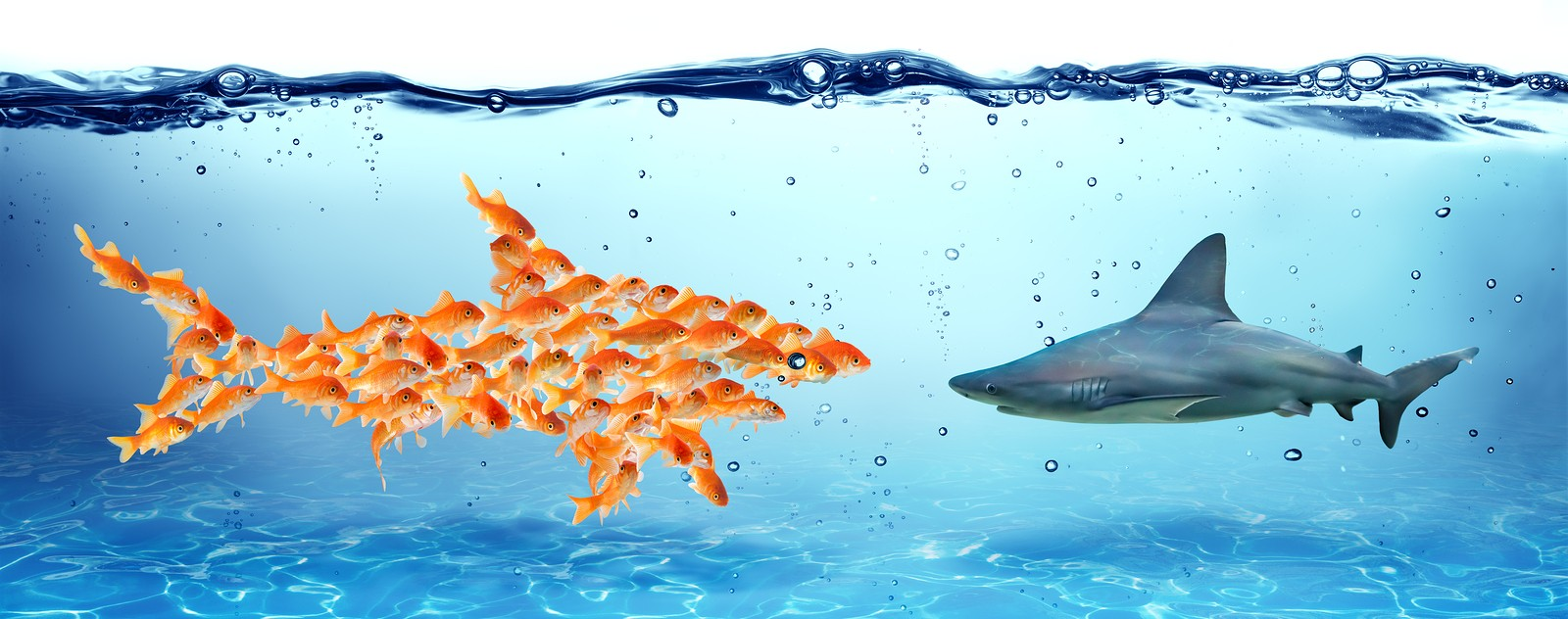 Unity is strength - teamwork concept, group of fish faces shark